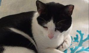2 faced linen studio cat, Frank, resting on hand stenciled coral design